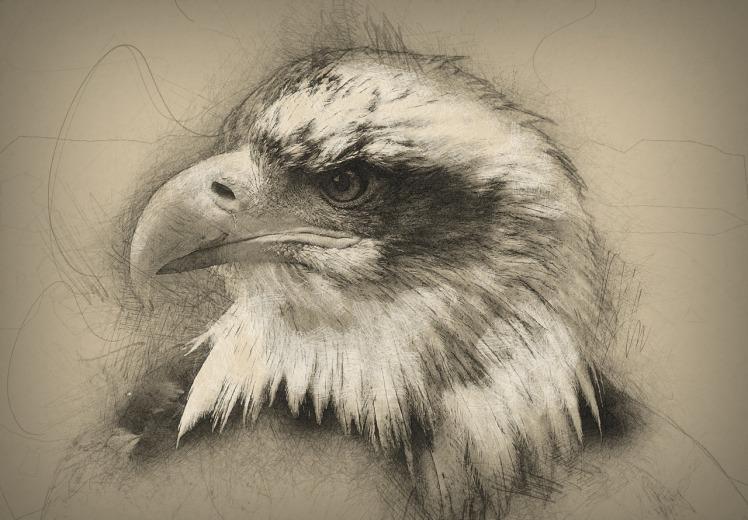bald-eagle-1582108_1280